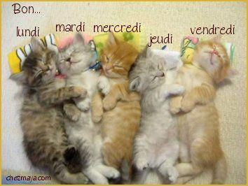 Bonne semaine avec que des chats !