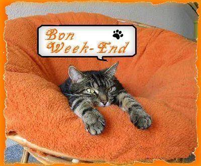 Bon week-end avec que des chats !